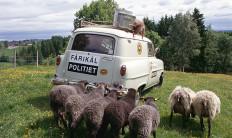 fårikål politiet i utmark a